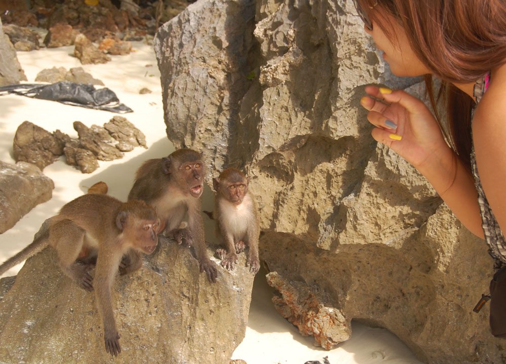 Angry Monkeys Beach, Where to Find Monkeys in Southeast Asia?