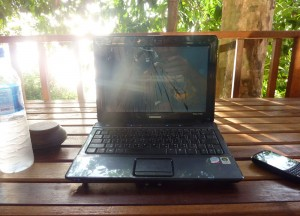 Monkey Smashing Laptop Screen, Where to Find Monkeys in Southeast Asia?