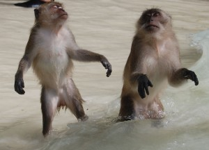 Zombie Monkeys Ko Phi Phi, Expensive Travel Mishaps, Thailand