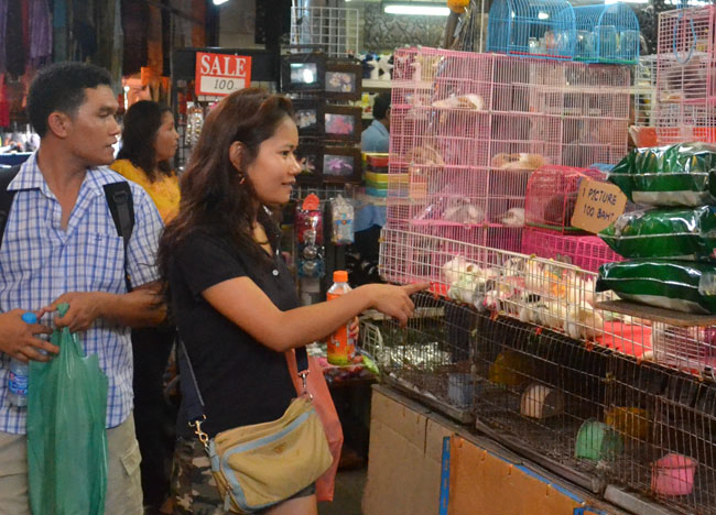 Buying Pets At Jj Market And Animal Cruelty Bangkok