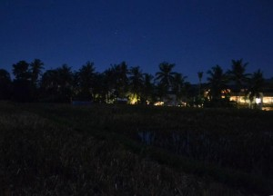 Rice Fields, Bebek Bengil, Best Restaurants in Ubud Centre, Top 3 Bali Food