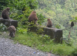 Gorumara National Park, Where to Find Monkeys in Southeast Asia?