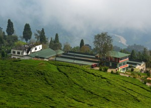 Temi Tea Factory, British Tea Plantations in Asia, Hill Stations