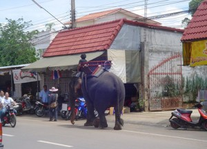 Elephant at Thai Border, Bangkok to Siem Reap, Angkor Wat Tour, Cambodia
