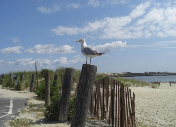 Hamptons Gull, Driving Road Trip in America, New York State