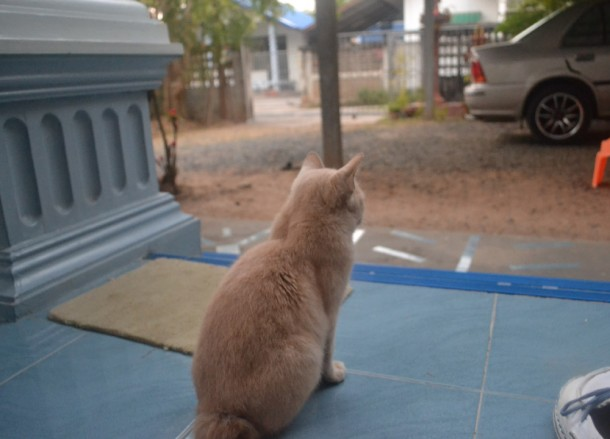 Tailless Cat on Doorstep, Living in Thailand, Nang Rong, Simple life Rural Thailand