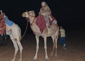 Camel Riding in Dubai Desert, Two Day Dubai Stopover, Emirates (UAE)