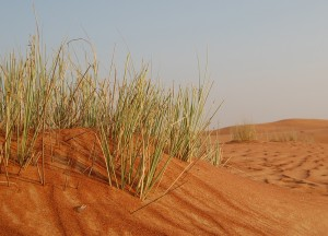 Grass in the Dessert of Dubai, Two Day Dubai Stopover, Emirates