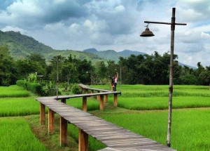 Zigzagging Rice Fields, Top 10 Chiang Rai Attractions, Northern Thailand
