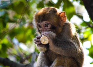 Cute Monkeys, Top Attractions in Hunan China