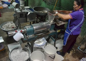 Milk Processing, How to Open, Prepare and Eat Coconuts