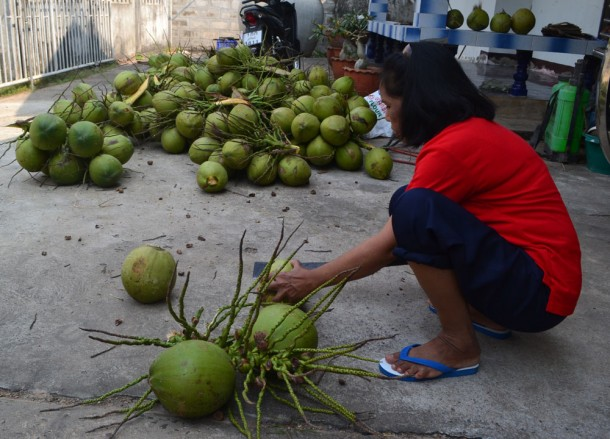 Green Coconuts, How to Open, Prepare and Eat Coconuts