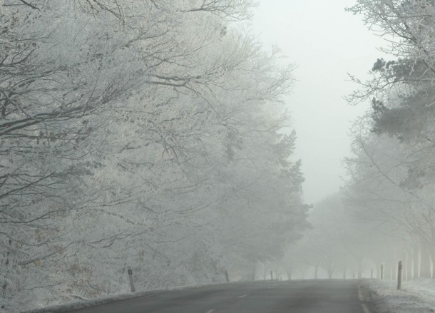 Crystal Trees, Winter Road Trip in East Central Europe