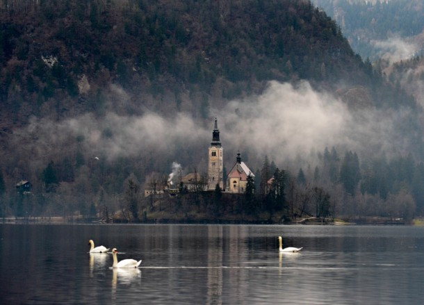 Swans at Lake Bled, Winter Road Trip in East Central Europe