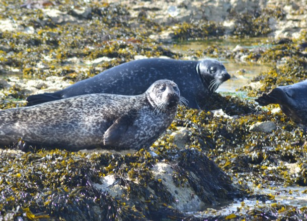 Seals on Rocks, Top Best Tourist Attractions in Northern Ireland