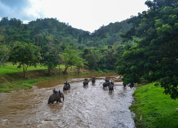 Elephants Mae Taeng, Top 10 Attractions in Chiang Mai Province Thailand
