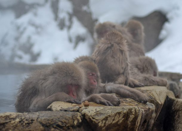 Snow Monkey Onsen, JR Japan Rail Pass Travel in Winter February Snow
