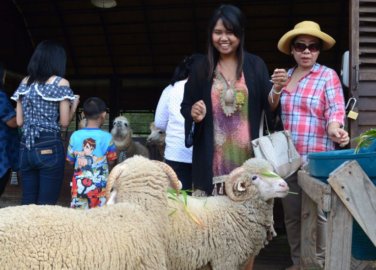 Khao Yai Thailand, Sheep on Achill Island: Sheep Tourism in Ireland Co. Mayo