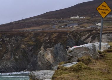 Sheep on a Cliff, Sheep on Achill Island: Sheep Tourism in Ireland Co. Mayo