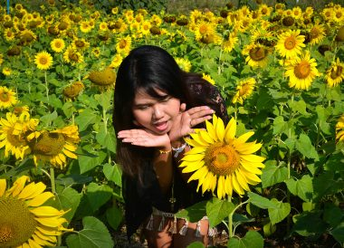 Sunflowers Field, Romance in Khao Yai DusitD2 Resort Thailand