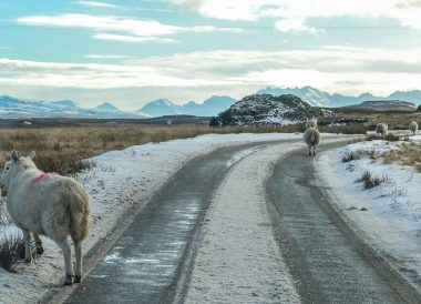 Sheep in Skye, Best Road Trips in Europe Fly and Drive Holidays