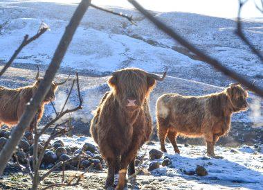 Road Trip Winter in Scottish Highlands Scotland